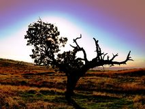 Única árvore bonita, natureza, sol, céu foto de stock royalty free