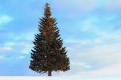 Única árvore de abeto no inverno Fotos de Stock Royalty Free