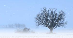 única árvore de 4K UltraHD em uma paisagem do inverno vídeos de arquivo