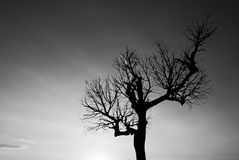Única árvore desencapada em preto e branco Imagens de Stock