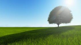 Única árvore do por do sol com animação do vento video estoque