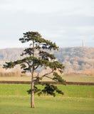 Única árvore em um campo Fotos de Stock Royalty Free