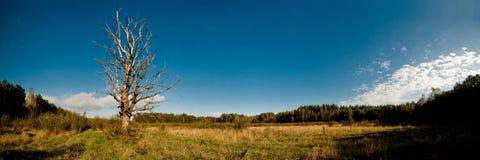 Única árvore em um campo grande e maduro foto de stock royalty free