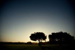 Única árvore em um campo no por do sol Imagens de Stock