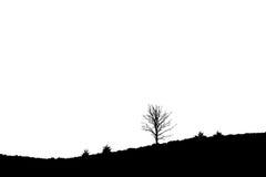 Única árvore na charneca de inclinação, Posbank Rheden Países Baixos Imagem de Stock