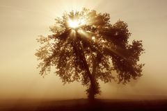 Única árvore na névoa Imagem de Stock Royalty Free