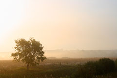 Única árvore na névoa Imagens de Stock