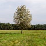 Única árvore na paisagem Fotografia de Stock Royalty Free