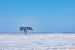 Única árvore na pradaria congelada Fotos de Stock