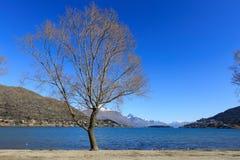 Única árvore na praia de Franton, Queenstown, Nova Zelândia Imagem de Stock