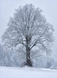 Única árvore na tempestade da neve Fotografia de Stock Royalty Free