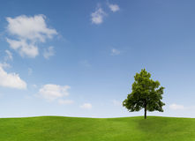 Única árvore no campo Imagens de Stock