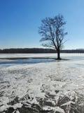Única árvore no campo de inundação, Lituânia fotografia de stock royalty free