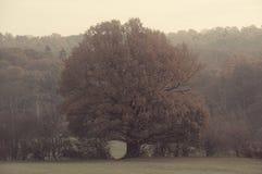 Única árvore no campo de yorkshire do outono Fotografia de Stock