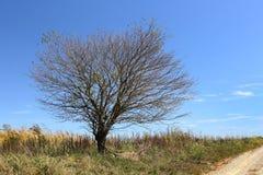 Única árvore no lado de uma estrada só do cascalho Fotos de Stock Royalty Free
