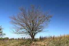 Única árvore no lado de uma estrada só do cascalho Fotografia de Stock Royalty Free