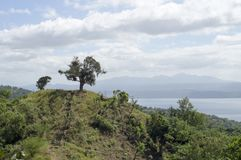 Única árvore no lago e no vulcão de negligência hilltop foto de stock royalty free