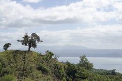 Única árvore no lago e no vulcão de negligência hilltop fotos de stock