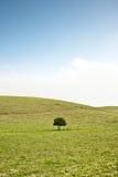 Única árvore no monte Imagens de Stock