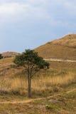 Única árvore no monte Fotografia de Stock Royalty Free