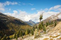 Única árvore no outono Fotografia de Stock Royalty Free