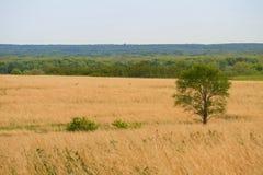Única árvore no pasto Imagens de Stock