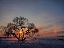 Única árvore no por do sol foto de stock