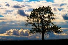 Única árvore no por do sol Fotografia de Stock Royalty Free