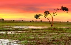Única árvore nos campos Fotos de Stock Royalty Free