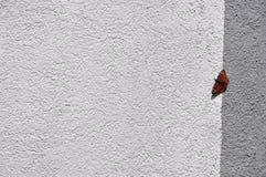 Única borboleta de Aglais io na parede pintada foto de stock