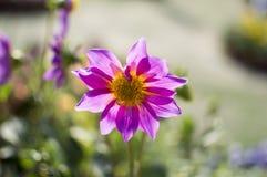 Única flor cor-de-rosa com plantas verdes ao redor Imagens de Stock Royalty Free