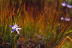Única flor e a grama fotografia de stock royalty free
