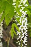Única flor no fundo do leito fluvial arenoso, fotos de stock royalty free