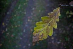 Única folha da floresta Fotografia de Stock Royalty Free