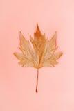 Única folha do outono em um fundo coral pastel simples Imagem de Stock Royalty Free