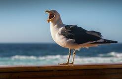 Única gaivota em uma cerca de madeira pelo oceano Imagens de Stock Royalty Free