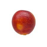 Única laranja siciliano vermelha colorida isolada no branco Fotos de Stock Royalty Free