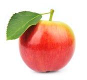 Única maçã do verão imagens de stock