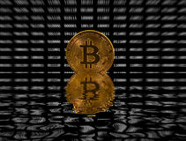 Única moeda do bitcoin no fundo digital preto imagem de stock royalty free