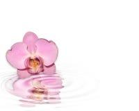 Única orquídea cor-de-rosa refletida Fotografia de Stock Royalty Free