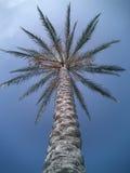 Única palmeira Foto de Stock Royalty Free