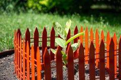 Única planta verde no plantador ajardine a orientação, profundidade de campo rasa, o broto é cercado com uma cerca vermelha Imagens de Stock Royalty Free