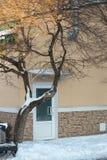 Única porta sob uma árvore coberta com a neve fotos de stock royalty free
