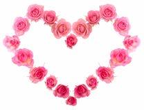 Única rosa da cor-de-rosa isolada Foto de Stock