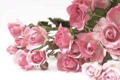 Única rosa da cor-de-rosa isolada Fotos de Stock Royalty Free