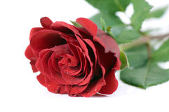 Única Rosa vermelha imagem de stock royalty free