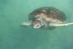 Única tartaruga de mar fotografia de stock