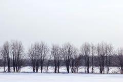 Únicas árvores no campo Inverno Fotografia de Stock Royalty Free
