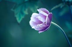 Únicas flores cor-de-rosa Fotografia de Stock