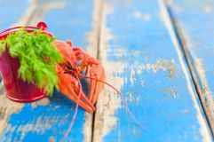 Únicas lagostas fervidas vermelhas inteiras atrás da cubeta vermelha pequena do metal com aneto verde fresco imagens de stock royalty free